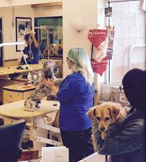 petsmart thanksgiving hours mr twix gets the rockstar experience at petsmartgrooming the