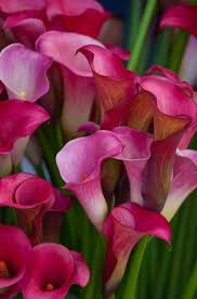Very Pretty Flowers - 8102 best just orchids images on pinterest flowers plants and