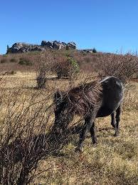 Grayson Highlands State Park Map by Visiting Grayson Highlands State Park Ponies Road Trip The World