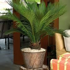 shop plants planters at lowes