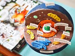 20 best cell projects images on pinterest animal cell project