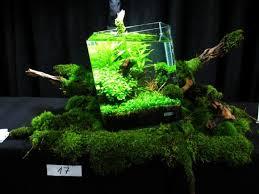 nano aquascape adi on twitter oliver knott nano out of square fish aquascape