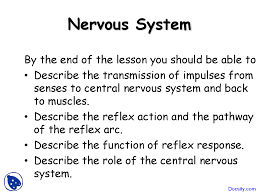 Describe A Reflex Action Nervous System Nerve Biology Lecture Slides Docsity