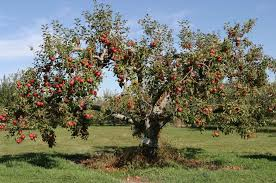 best fruit trees for missouri nixa lawn service