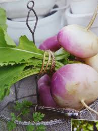 may turnip and radishes spajzgirl