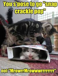 Funny Cats Meme - lol cats 50 awesomely funny cat photos to crack you up