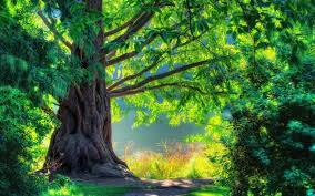 46 hd and qhd wallpapers of gorgeous trees 2