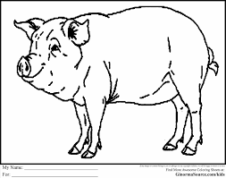 out on voluntpriscom ideas pig color sheet pig print out on