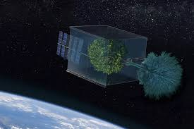 can a tree grow in space usc news