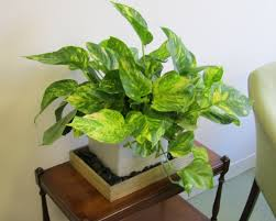 plush together with easy to plant houseplants that improve air