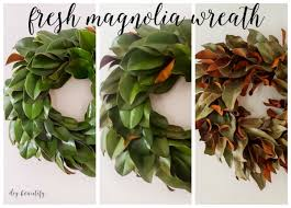 fresh magnolia wreath diy beautify