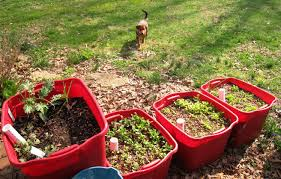 Vegetables For Container Gardening by Creative Container Gardening Ideas
