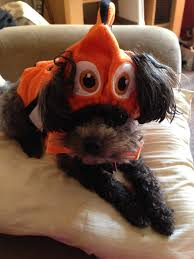 great dog halloween costumes great pet halloween costumes just short of crazy