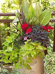 Tropical Plants Pictures - guide to growing tropical plants