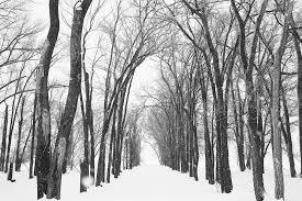 black white landscape nick price photography