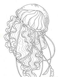 free coloring pages jellyfish realistic jellyfish free printable coloring page for adults animal