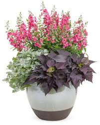Flowers For Morning Sun - potted flowers for morning sun the best flowers ideas