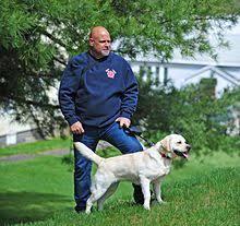 Training A Guide Dog For The Blind Labrador Retriever Wikipedia