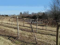 Trellis System Trellis Systems For Your Vineyard Viticulture Program