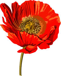 clipart opium poppy 2 low resolution