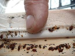 Bug Bombs For Bed Bugs 100 Effective Bed Bug Treatment Found In Ma Networx