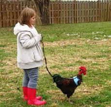 garden design garden design with choosing your backyard chickens