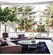 60 best indoor potted trees images on indoor plants