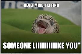 Angry Gamer Kid Meme - 25 adorable hedgehog memes