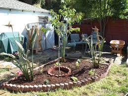 a backyard flower garden
