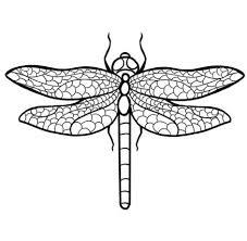 draw dragonfly 11 steps