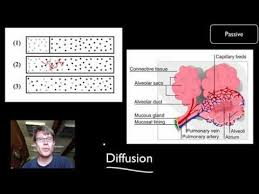 016 transport across cell membranes u2014 bozemanscience
