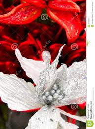 decorations silver and white poinsettia stock photo