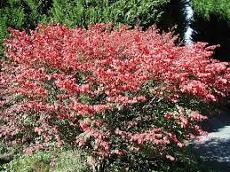 Flower Shrubs For Shaded Areas - shrubs for part shade and full shade areas