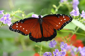 all about butterflies care2 healthy living