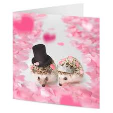 engagement congratulations card hedgehogs walking a confetti aisle wedding engagement