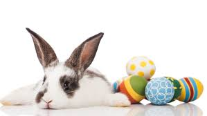 bunnies for easter pet store refuses to sell bunnies for easter because are