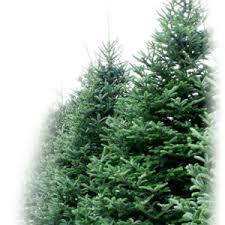 7ft christmas tree christmas trees christmas tree dublin