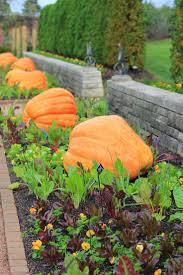 19 best gardening fall images on pinterest fall planting fall
