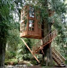 famous tree houses now that s a tree house startling pictures of homes in the