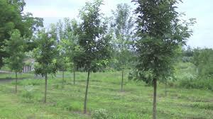 White Oak Swamp White Oak Youtube