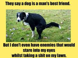 Funny Best Friends Memes - funny memes dog man s best friend meme collection