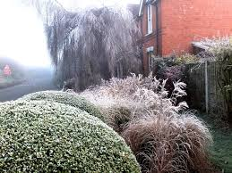 winter planting interest frosty border artisan gardening