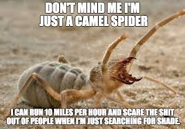 Spider Meme - this picture has a spider in it imgflip