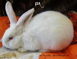 raising rabbits learnaboutrabbits