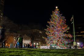 tree ceremony lights up new haven green
