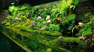 Aquascape Aquarium Plants Aquascaping Styles Design Ideas And Mistakes To Avoid