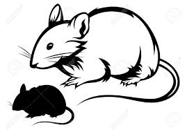 black white rat silhouette