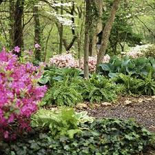 Landscaping Ideas For Big Backyards by Best 25 Wooded Backyard Landscape Ideas On Pinterest Wooded