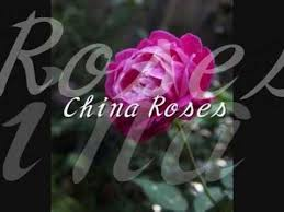 china with roses enya china roses 和訳