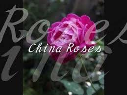 roses china enya china roses 和訳